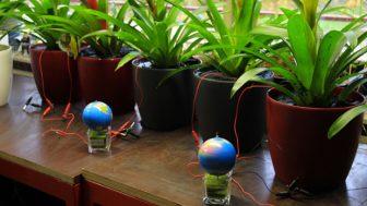 Canlı bitkilerin enerjisi bir sonraki sürdürülebilir güç kaynağı olabilir mi?